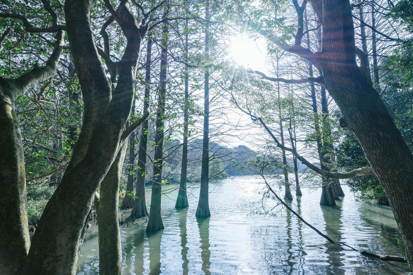 「幻想的な篠栗九大の森」の写真