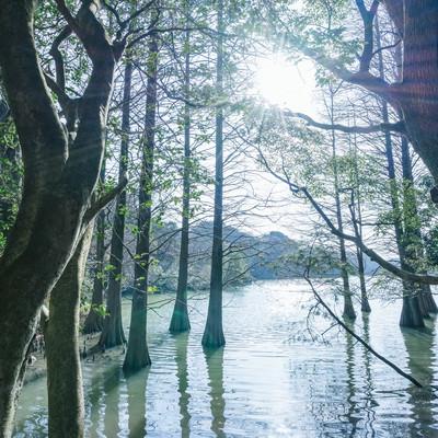 「幻想的な篠栗九大の森」の写真素材