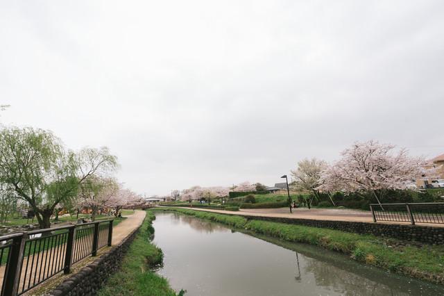 桜咲く大刀洗公園(曇り)の写真