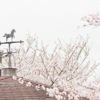 「風見鶏と桜」の写真素材