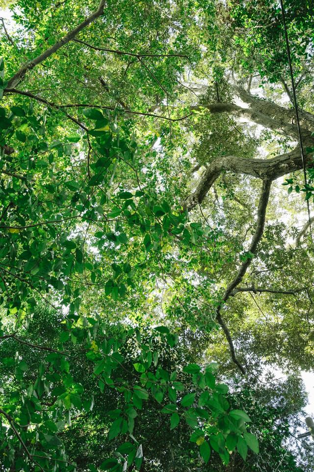 森の中と木漏れ日の写真