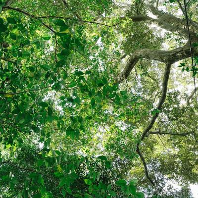 「森の中と木漏れ日」の写真素材