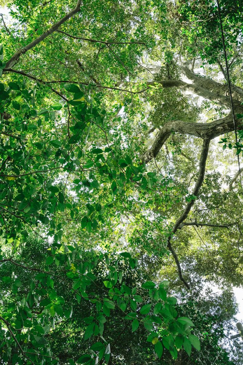 「森の中と木漏れ日」の写真