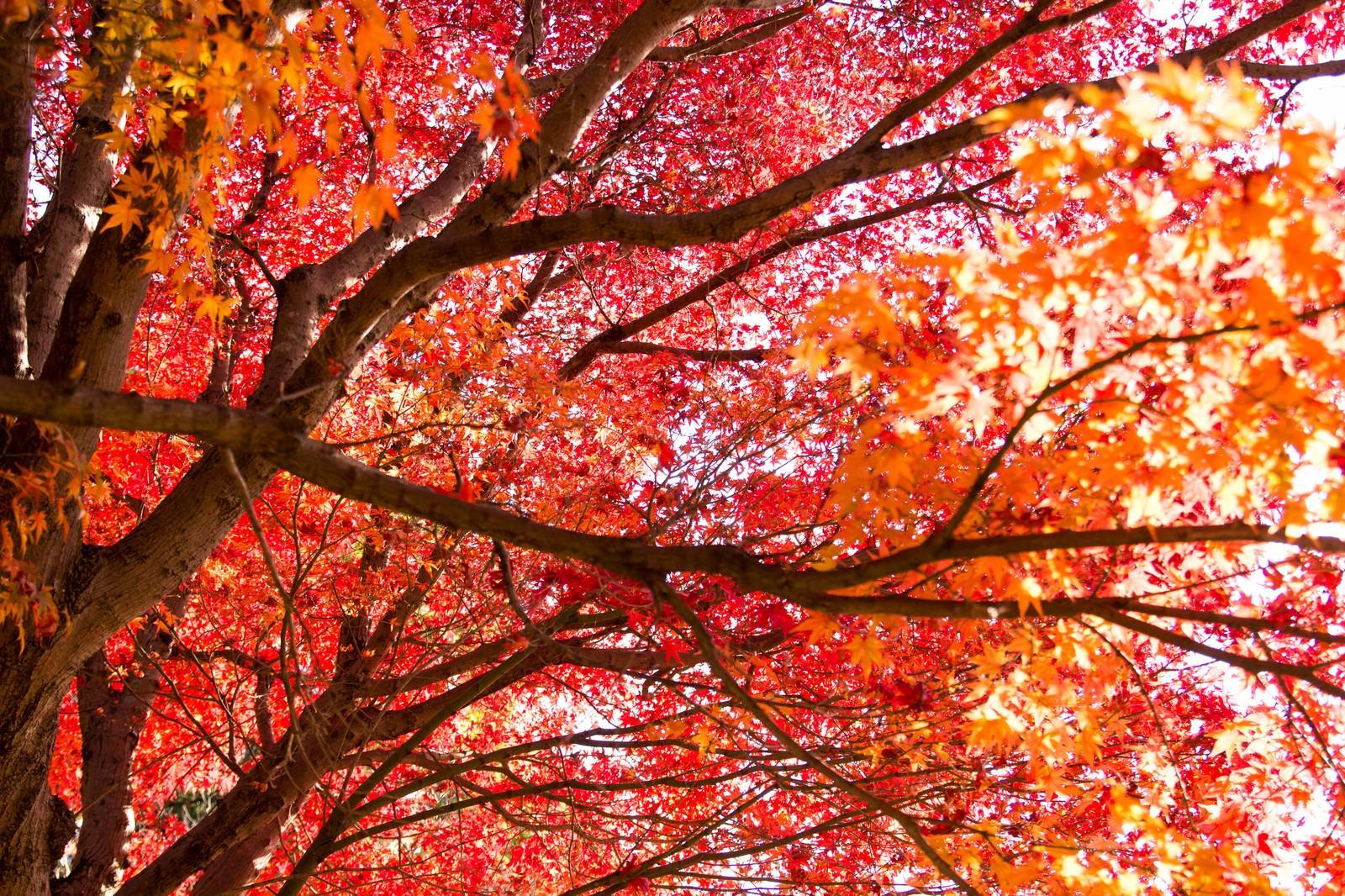 「赤く染まった木」の写真