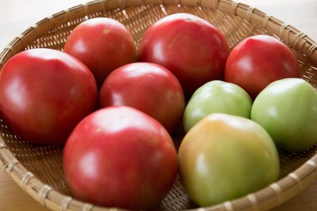 ザルに入った採れたてのトマトの写真