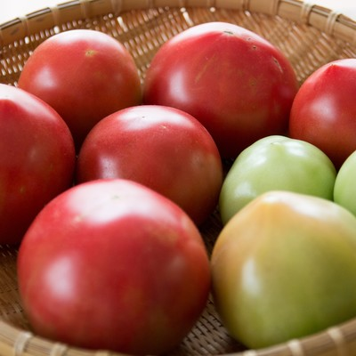 「ザルに入った採れたてのトマト」の写真素材