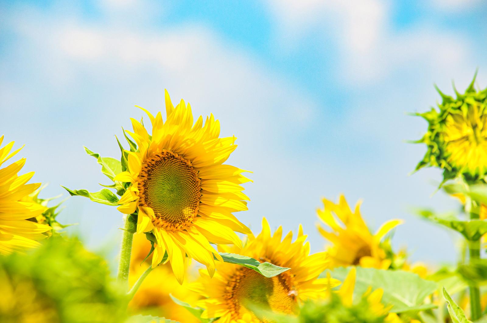 「夏色」の写真