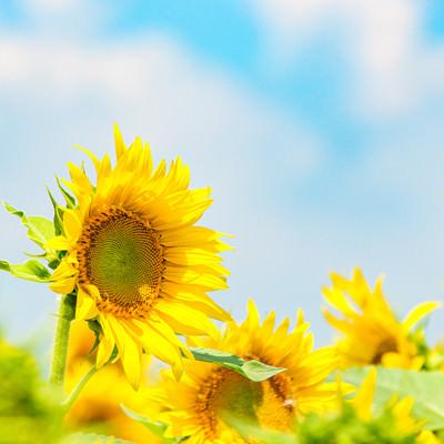 夏色の写真
