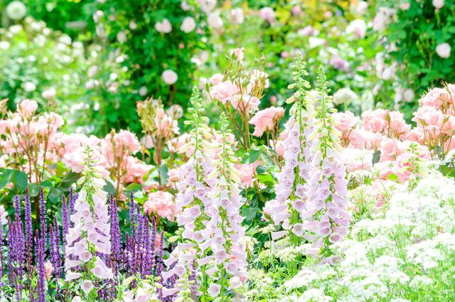 初夏の庭園の写真