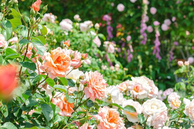 花盛りの写真