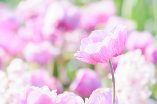 早春満開の写真