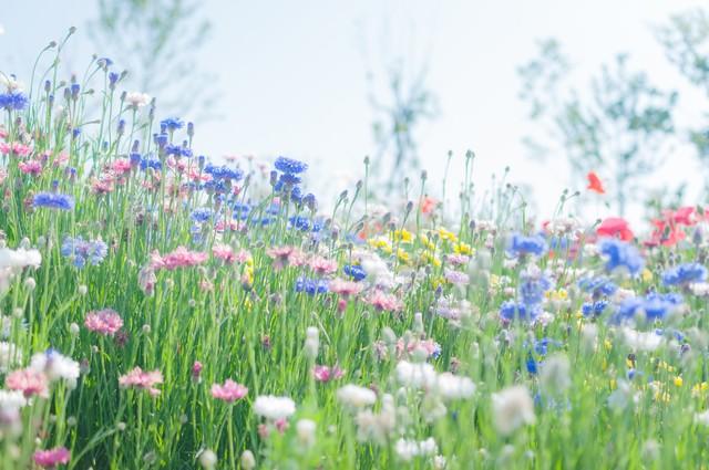 「咲き乱れる」のフリー写真素材