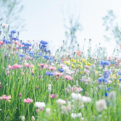 「咲き乱れる」の写真素材