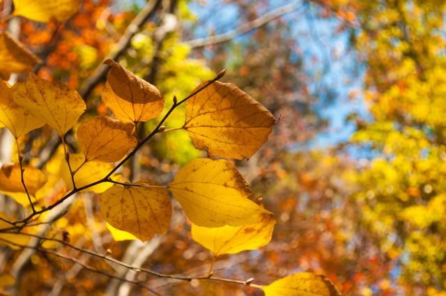 色づいた葉の写真