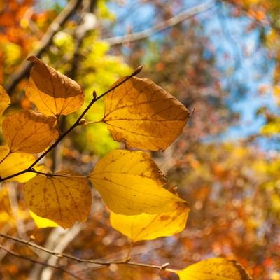 「色づいた葉」の写真素材