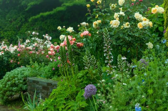 花咲く庭の写真