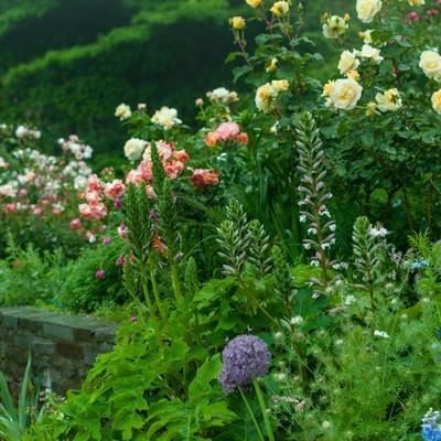 「花咲く庭」の写真素材