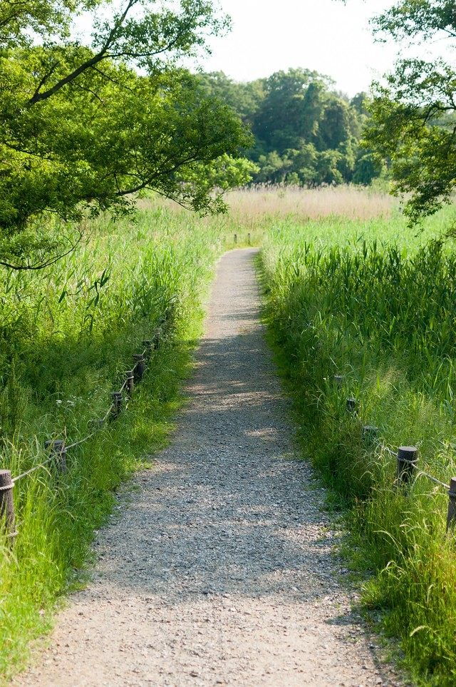 自然豊かな遊歩道の写真