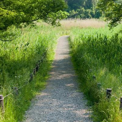 「自然豊かな遊歩道」の写真素材