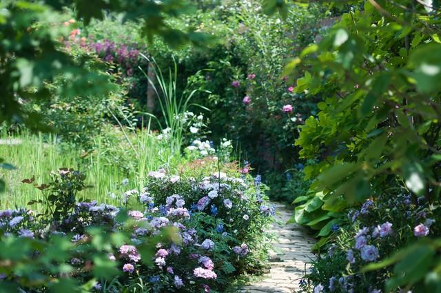 昼下がりの庭園の写真