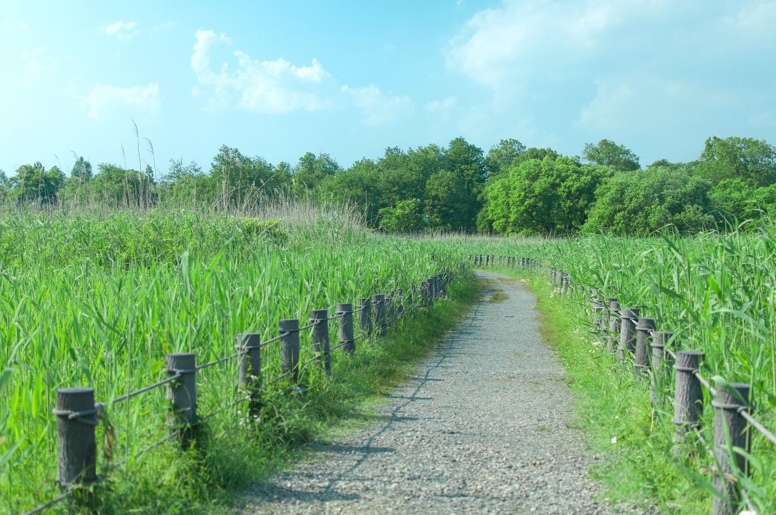 「柵で区切られた遊歩道」の写真
