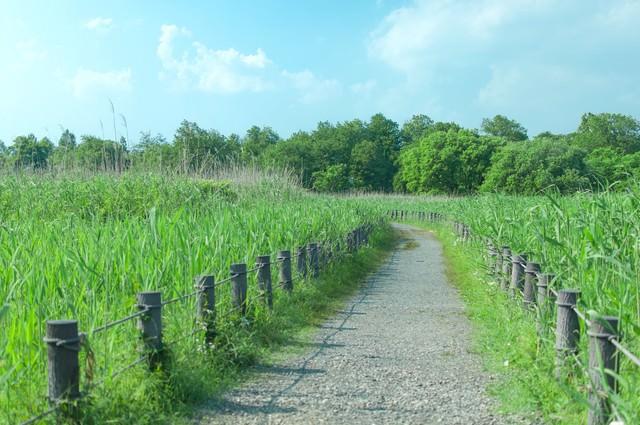 柵で区切られた遊歩道の写真