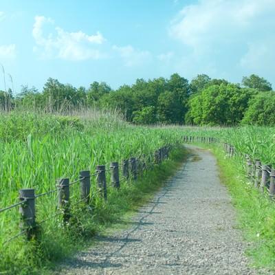 「柵で区切られた遊歩道」の写真素材