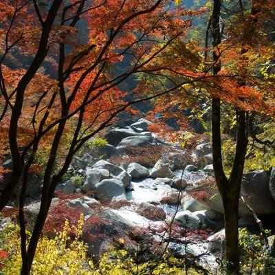 上流の黄葉の写真