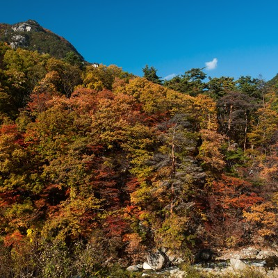 秋の山の写真