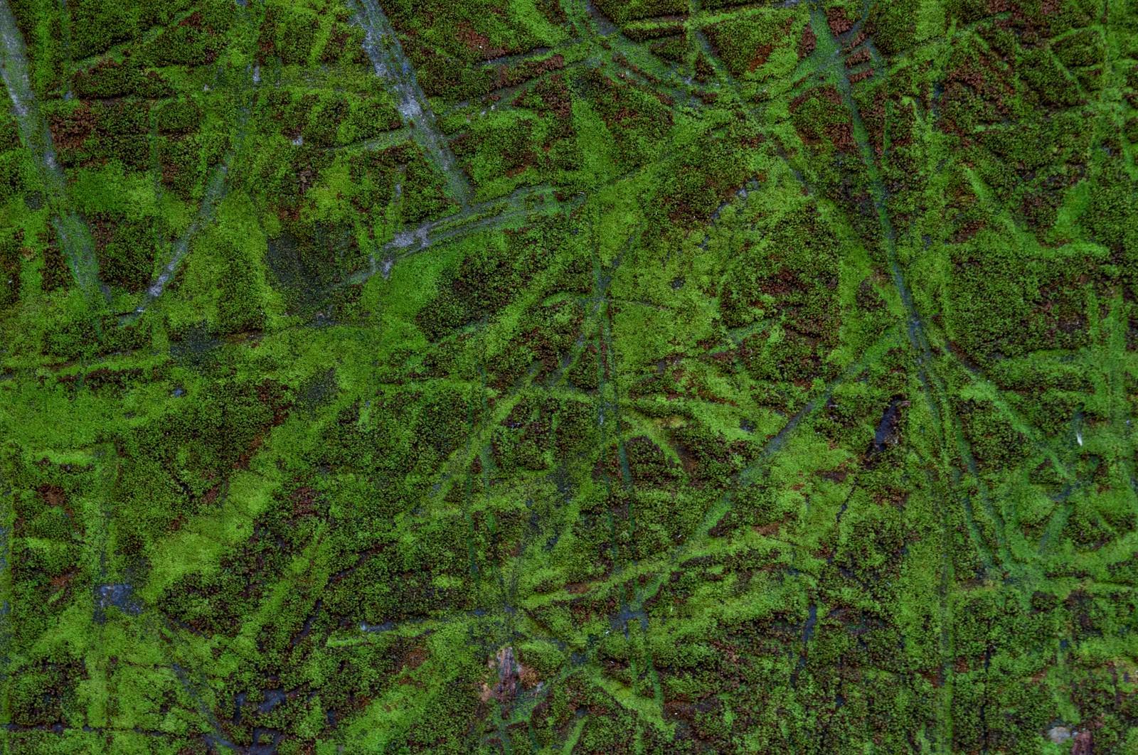 「傷ついた壁とコケ傷ついた壁とコケ」のフリー写真素材を拡大