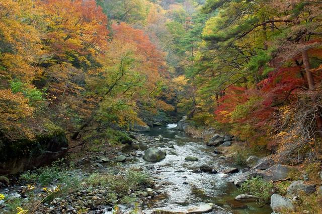 黄葉と渓流の写真