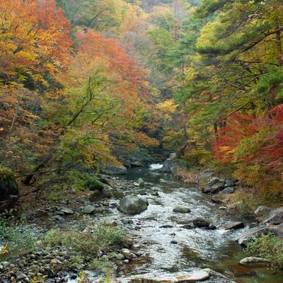 「紅葉と渓流」の写真素材