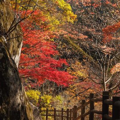 黄葉した遊歩道の写真