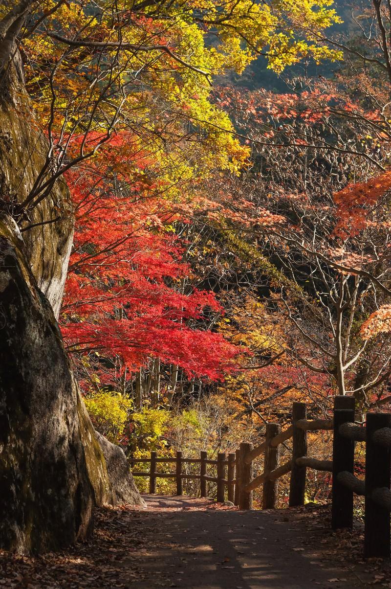 「黄葉した遊歩道」の写真