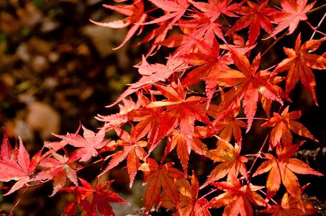 照る山紅葉の写真