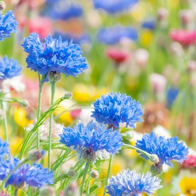 「花畑」の写真素材