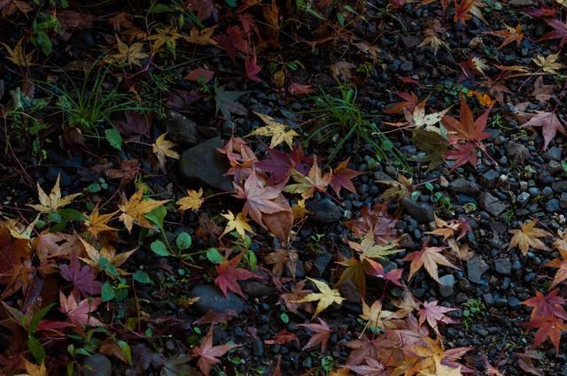 晩秋の写真