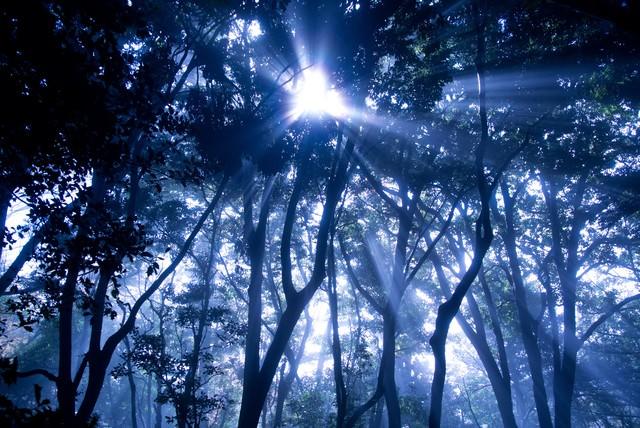 光の森の写真