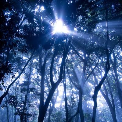 「光の森」の写真素材
