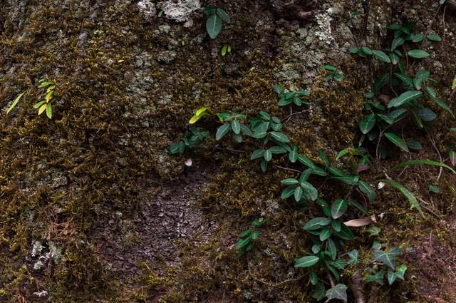樹の幹の写真