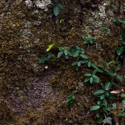 「樹の幹」の写真素材