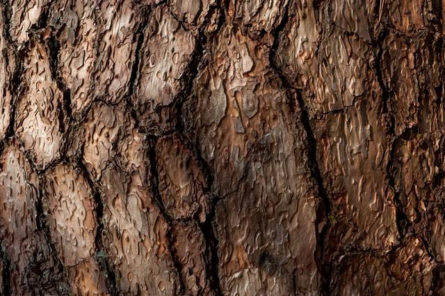 木の幹のテクスチャーの写真