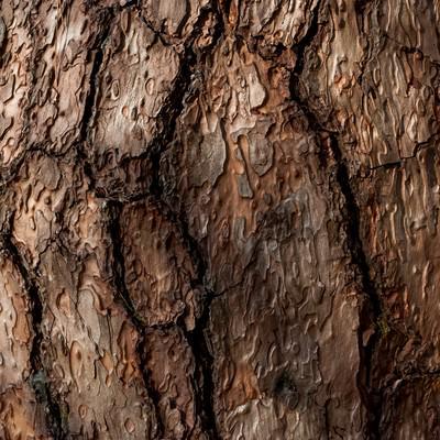 「木の幹のテクスチャー」の写真素材