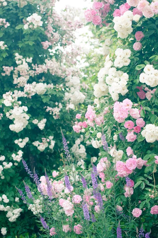 オベリスクに絡まる蔓と薔薇の写真