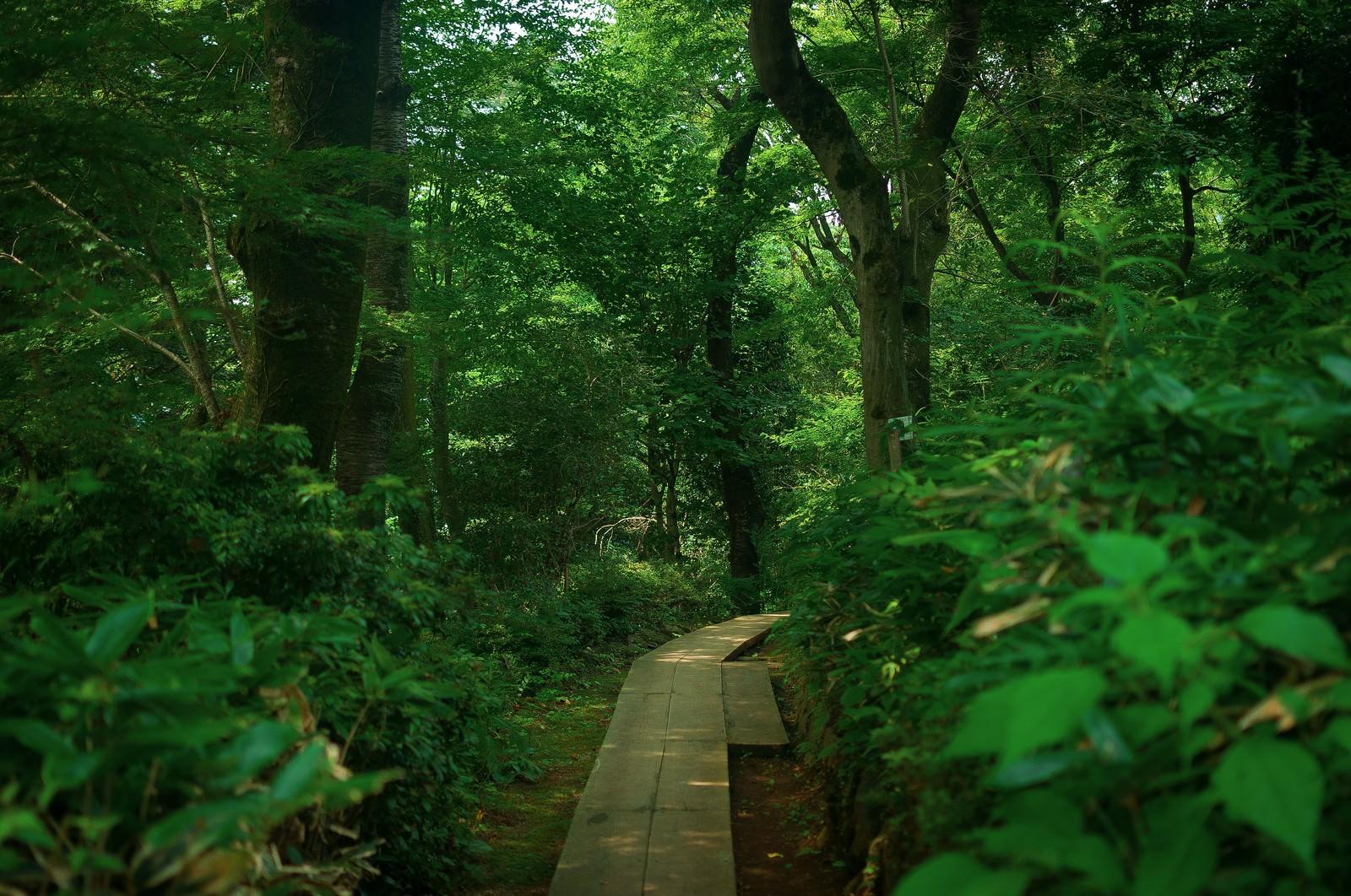 「高尾山の山道」の写真