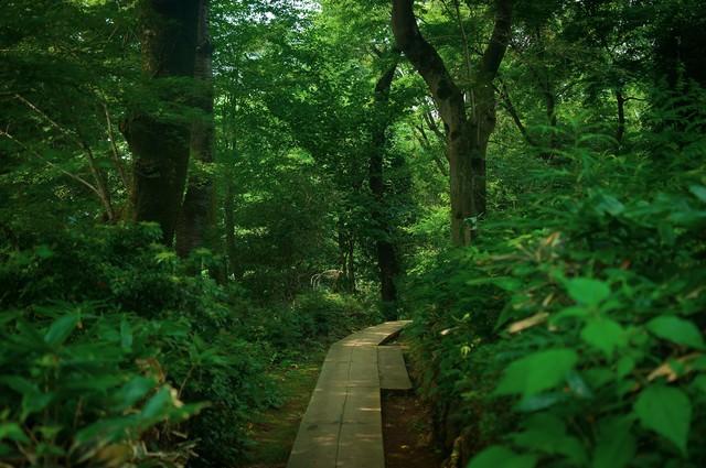 高尾山の山道の写真