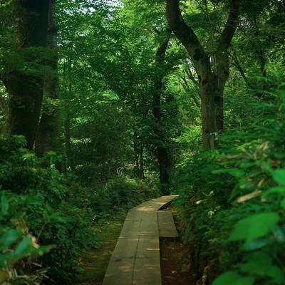 「高尾山の山道」の写真素材