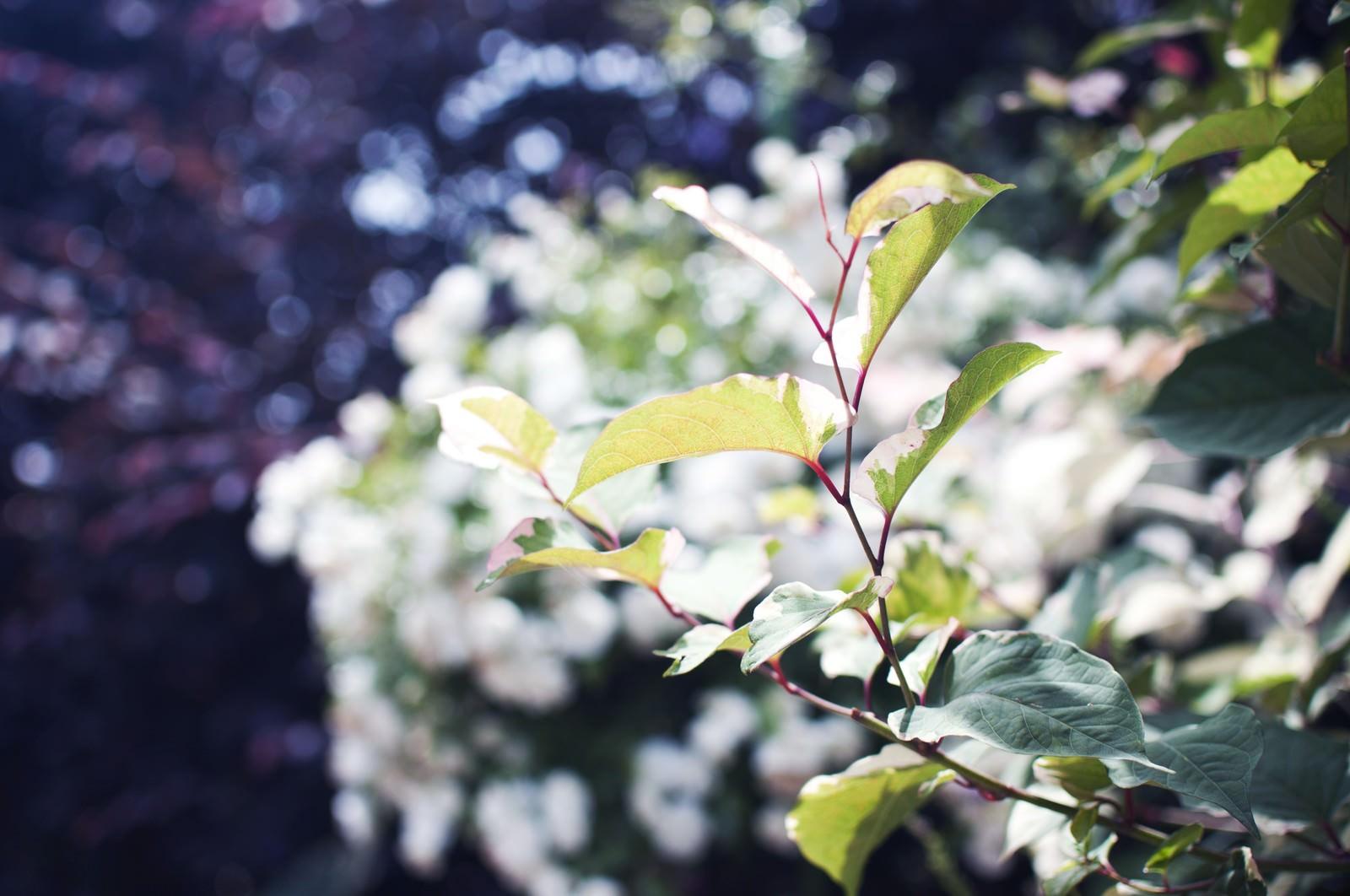 「いのちを感じる美しい葉」の写真