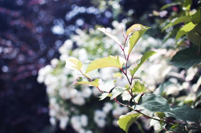 いのちを感じる美しい葉の写真