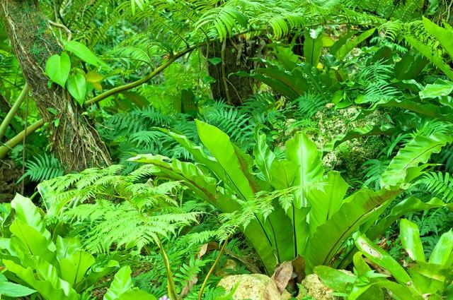 緑の庭の写真